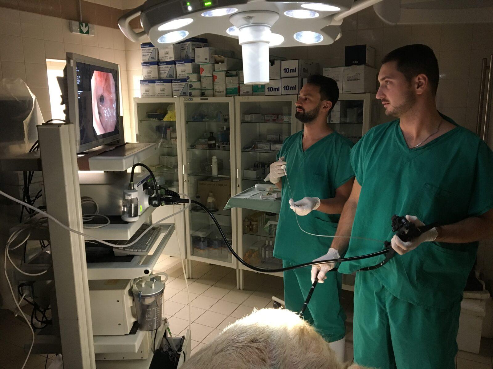 Nové minimálně invazivní možnosti léčby pooperační recidivy Crohnovy choroby na experimentálním modelu - foto 1