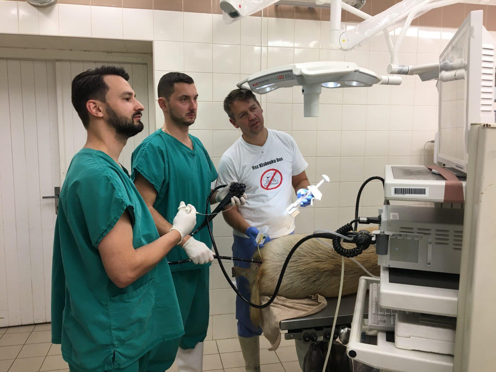 Nové minimálně invazivní možnosti léčby pooperační recidivy Crohnovy choroby na experimentálním modelu - foto 2